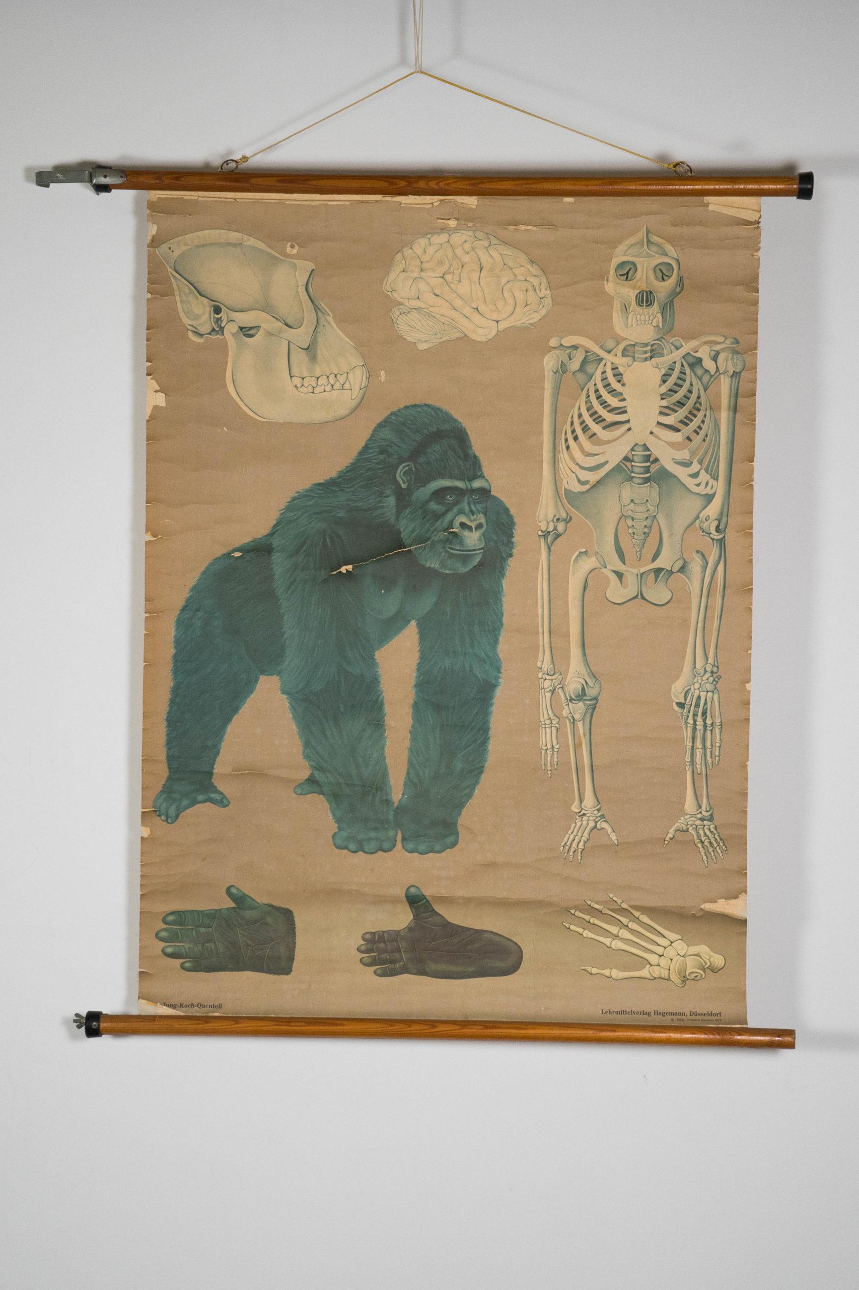 vista general de gorila azul vintage aleman de diseño