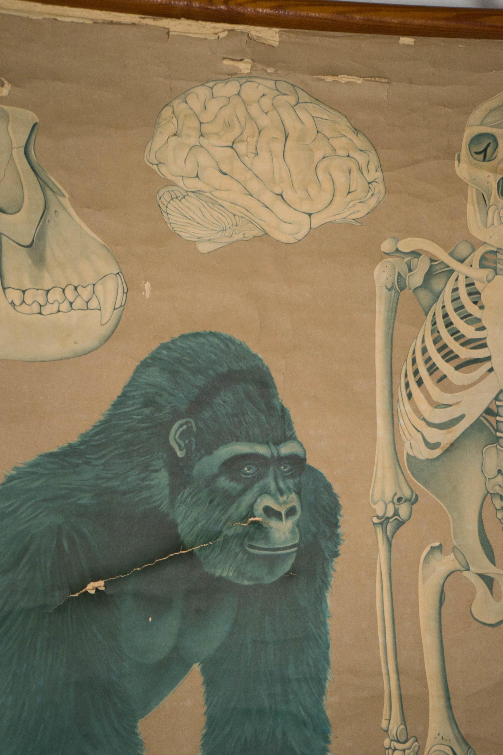 detalle de lamina ilustrada naturaleza