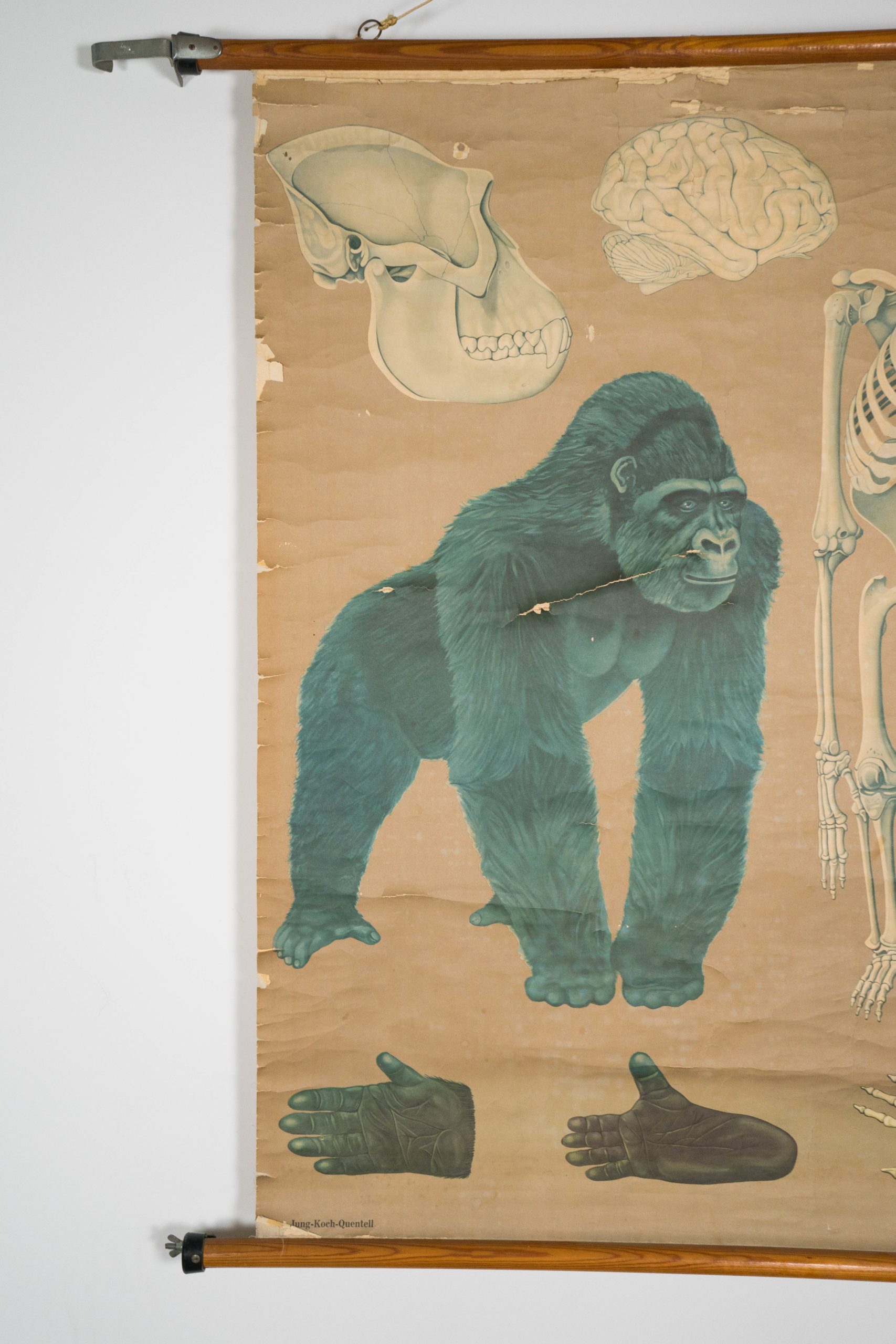 detalle de mapa vintage lamina de gorila