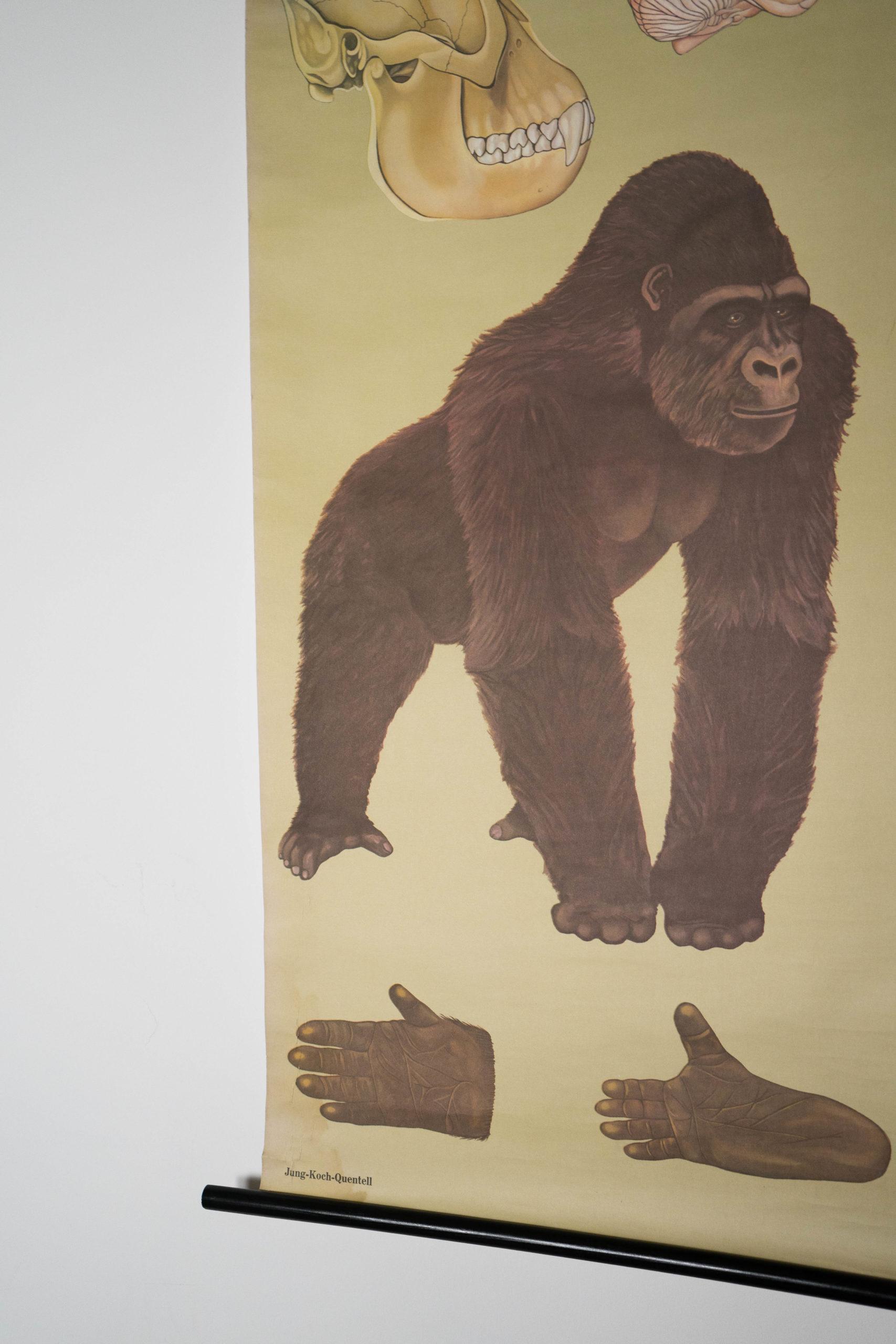 detalle de ilustracion de gorila marrón anitguo